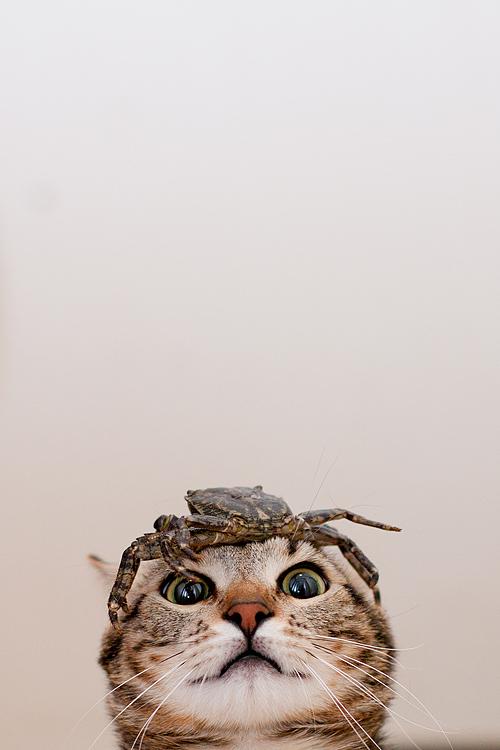 crabcat