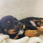 Foster puppy Ketchup Skywalker