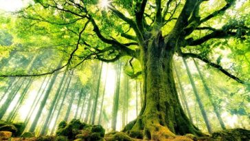 9 Fast Growing Trees For Your Garden