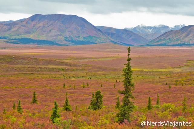 Paisagem com cores de outono no Denali National Park - Alasca