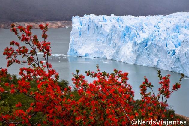 Notros perto do glaciar Perito Moreno
