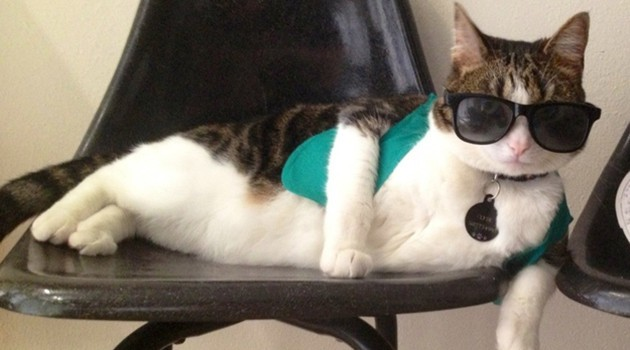 Werk your work like this cat werks this outfit. #FIERCE