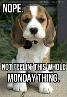 Monday Puppy