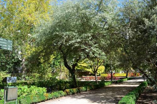 Botanical Garden, Madrid