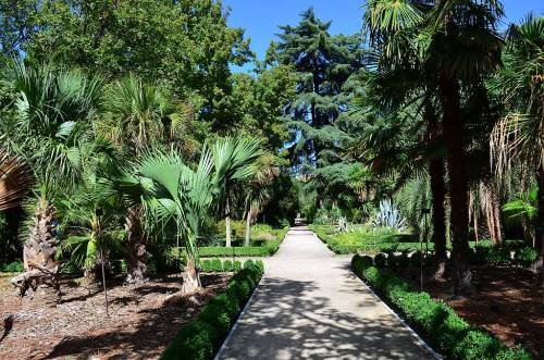 Botanical Gardens, Madrid