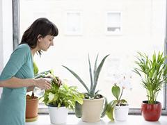 Ποτίζεται τα φυτά σας με όξινο νερό Kangen.