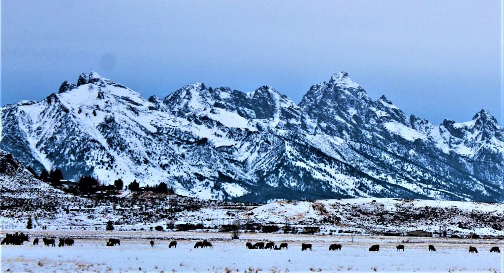 The Grand Tetons overlook the National Elk Refuge