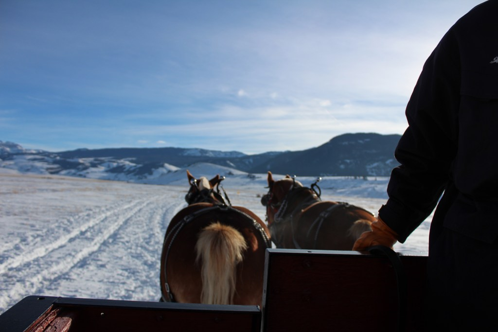 A view sitting by a National Elk Refuge Sleigh Ride Diver