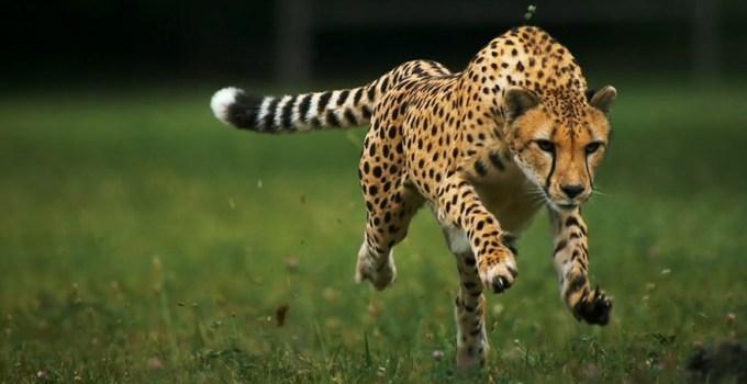 Ciri-Ciri Makhluk Hidup Beserta Pengelompokan & Contoh Makhluk Hidup