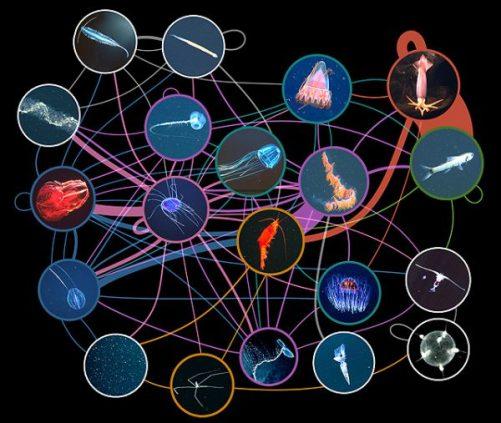 Functions of food webs