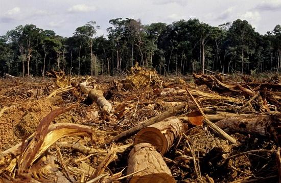Penyebab Pemanasan Global - Pengrusakan Hutan