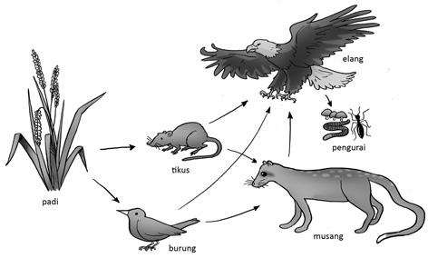 Gambar Ilustrasi mata pelajaran