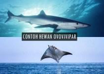 10 Contoh Hewan Ovovivipar
