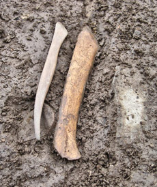 The bone tool next to its modern-day equivalent.
