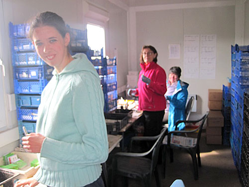 Some of the finds team hard at work sorting and cataloguing the mountain of finds from the site.