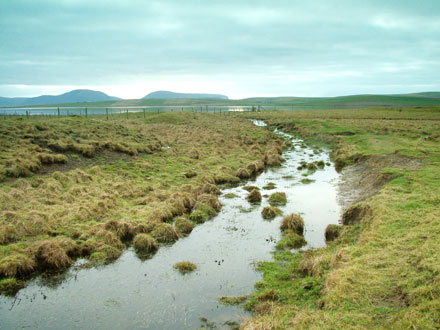 The water-filled ditch to the north of the Dyke o' Sean. (Sigurd Towrie)