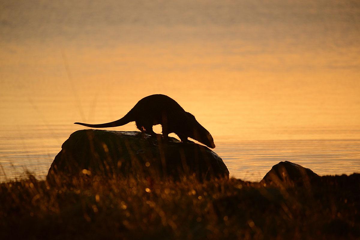 Sunrise at the loch.