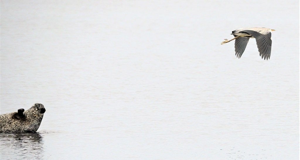 Selkie and heron.