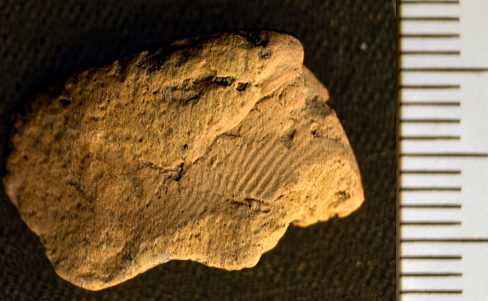 The Neolithic potter's fingerprint on a sherd of pottery recovered at the Ness of Brodgar. (Jan Blatchford)