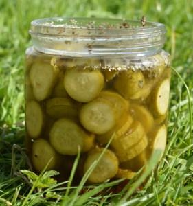 24 Hour Pickled Gherkins in a jar