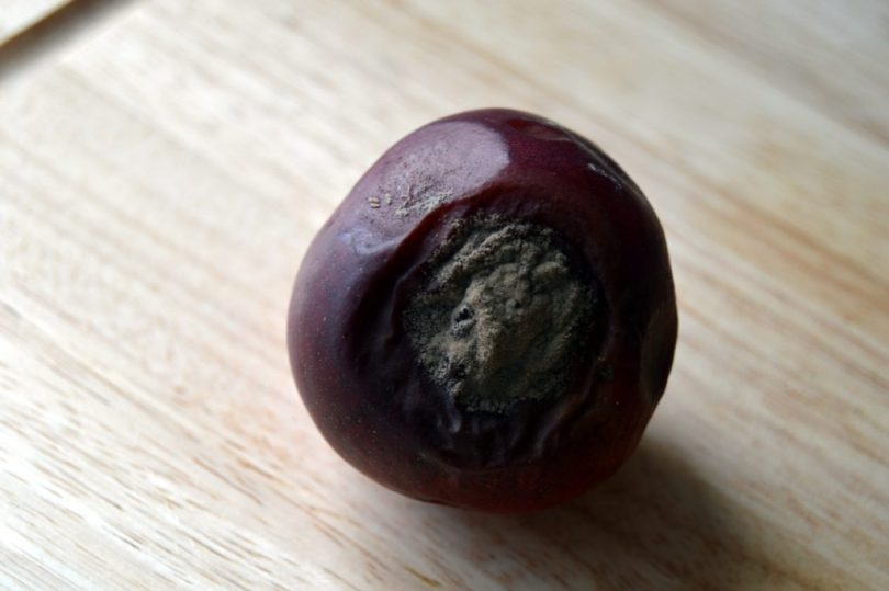 mouldy fruit for chemical free DIY fruit fly trap