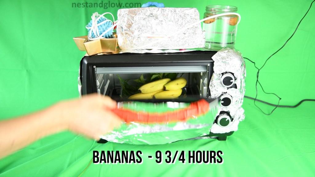 Bananas grown in 9 3/4 hours