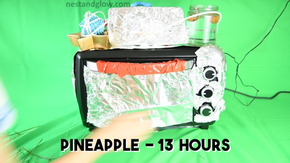 grow pineapple in 13 hours