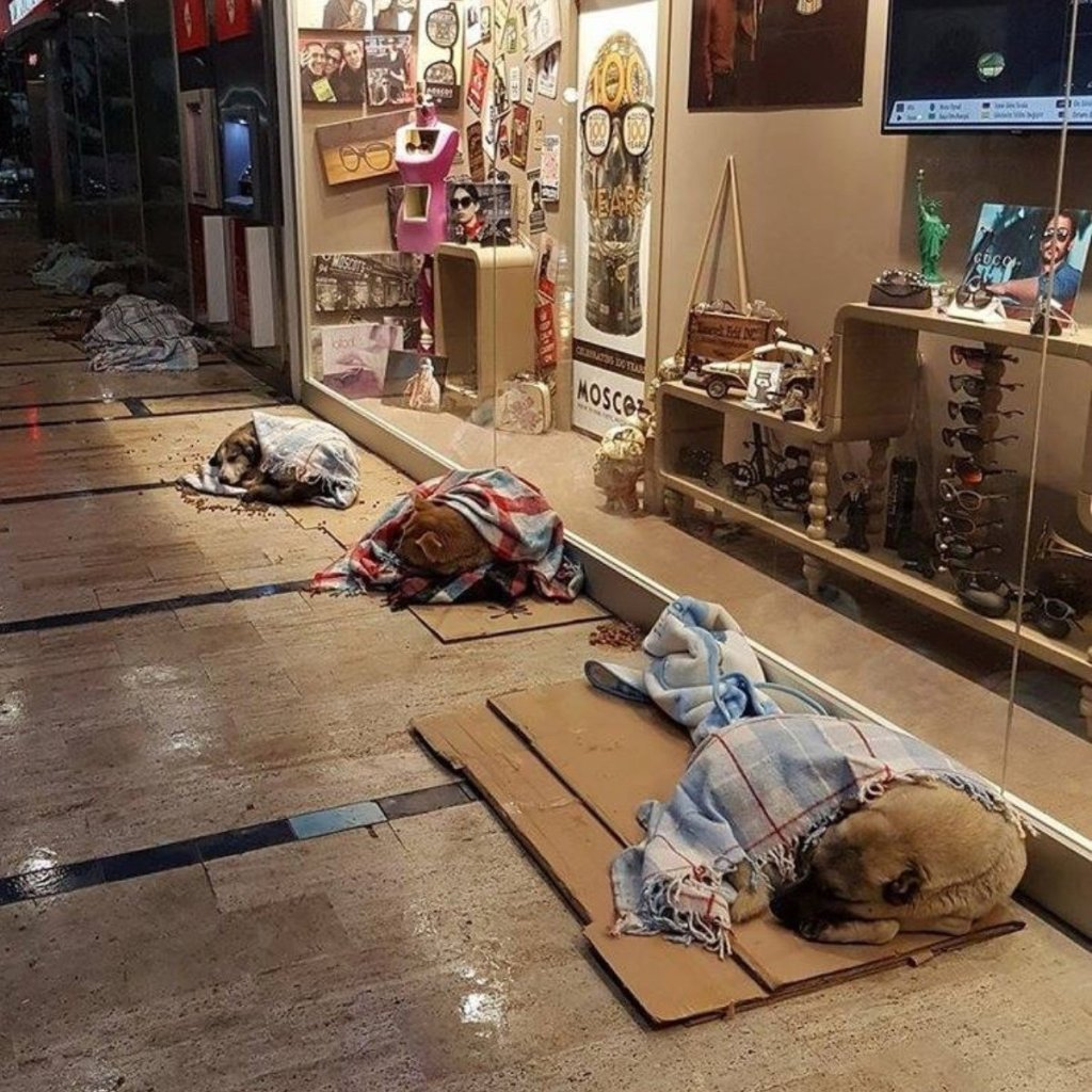 homeless dogs mall istanbul