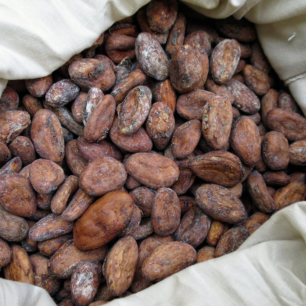 bitter Cacao beans