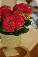 Rasberry Hydrangeas