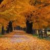 jesen-t