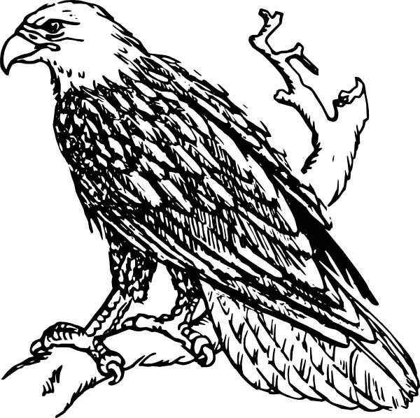 awesome bald eagle coloring page netart
