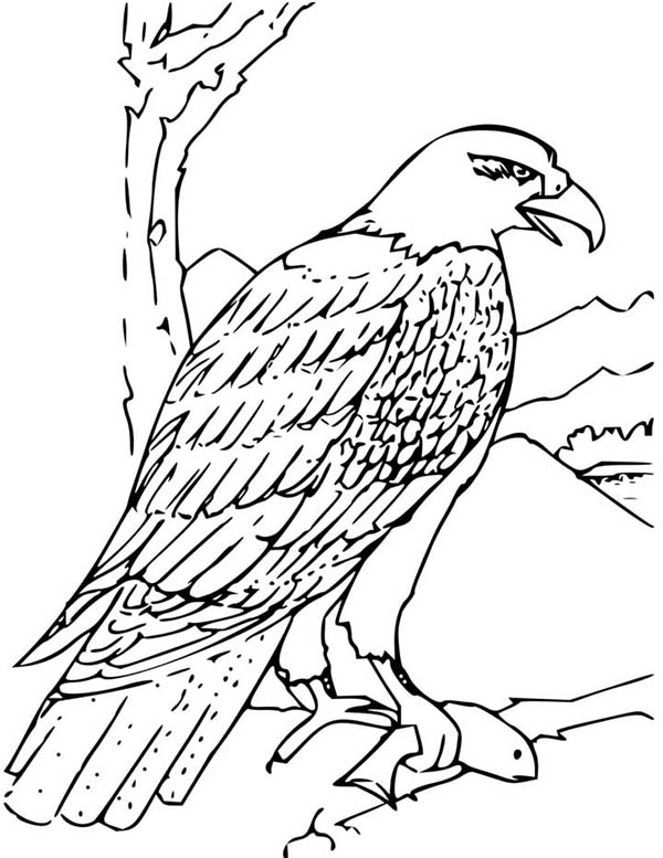 bald eagle eating fish for lunch coloring page netart