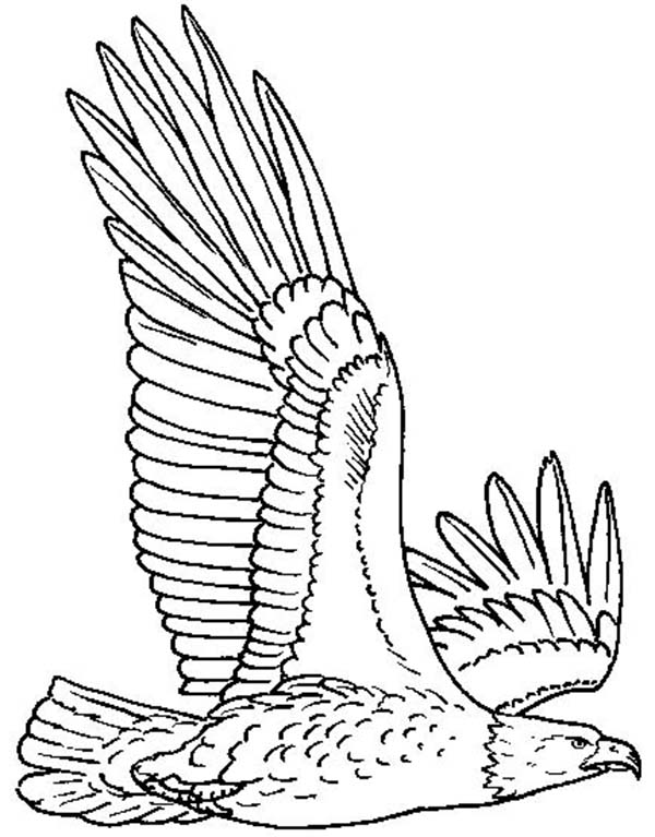bald eagle flying high coloring page netart