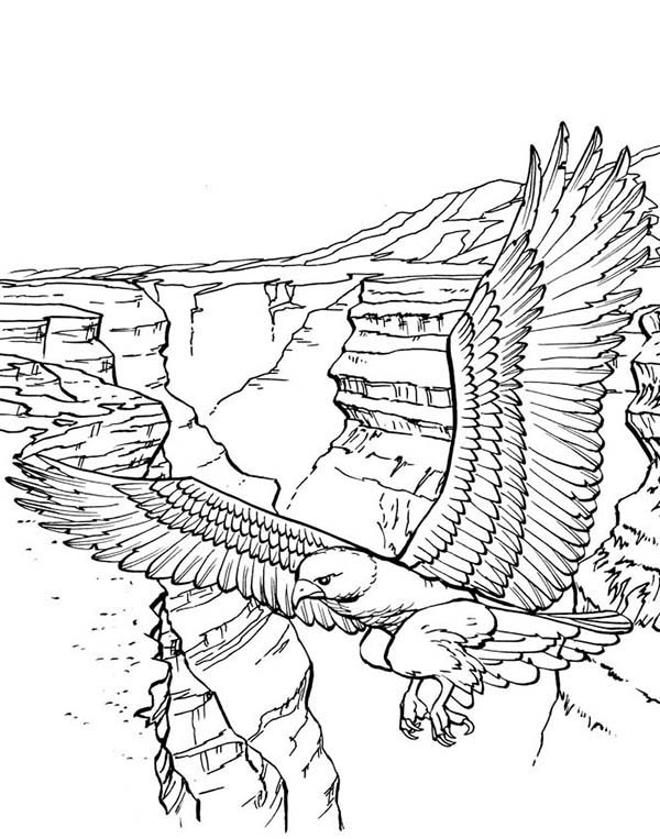 bald eagle of the mountain coloring page netart