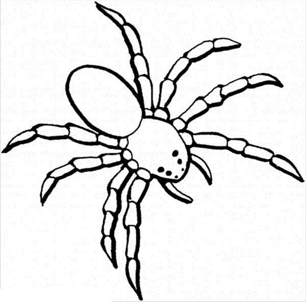 dangerous spider coloring page netart