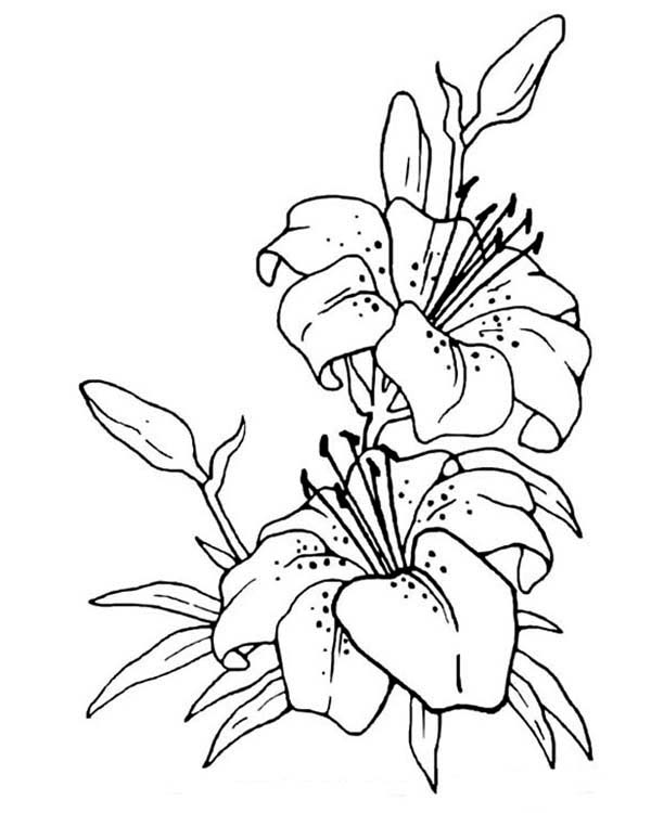 drawing here home flowers flower drawing