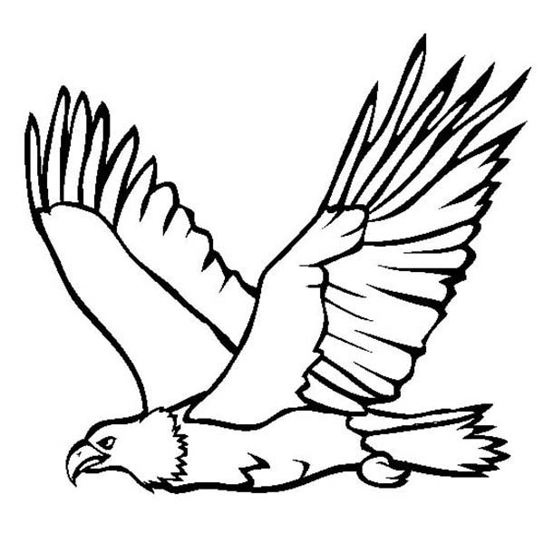 here home bald eagle great flying bald eagle coloring page