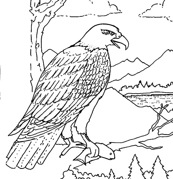 eat coloring page here home bald eagle hungry bald eagle eat coloring
