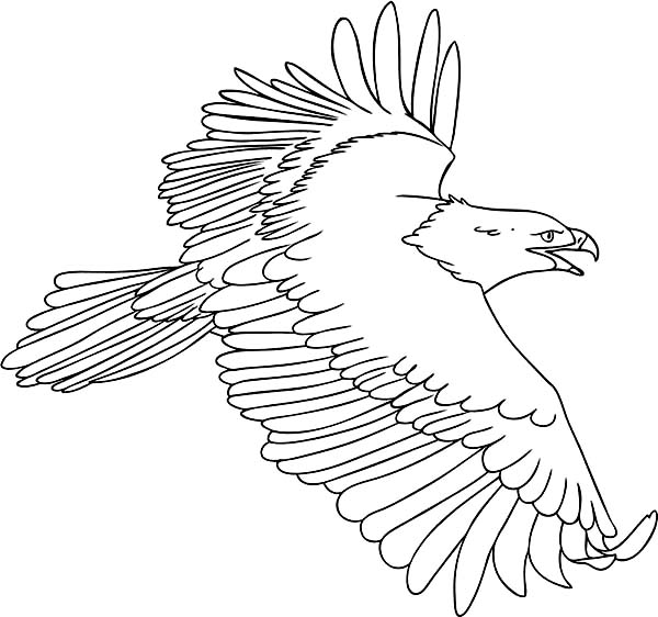 the flying bald eagle coloring page netart