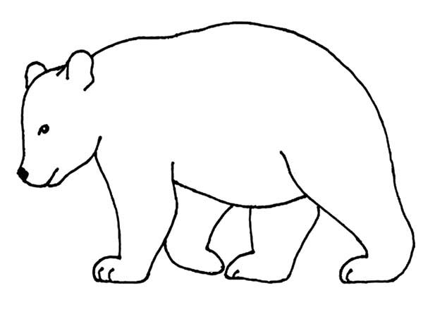 Bear Outline Picture Coloring Page NetArt