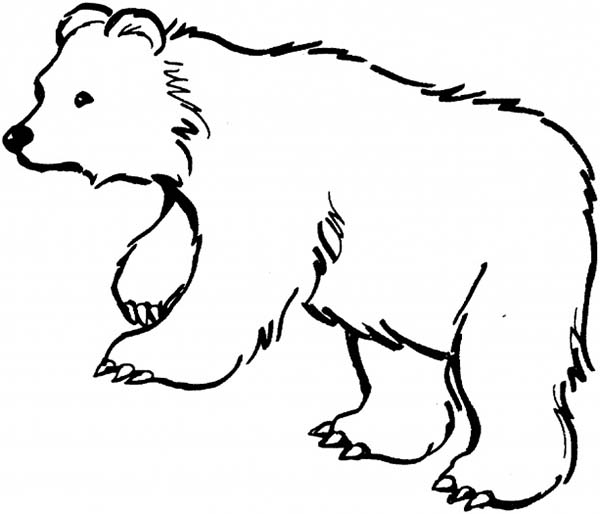 black bear is hungry coloring page netart