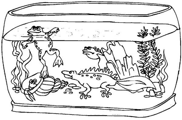 fish tank fill wierd animals coloring page netart