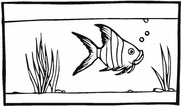 fish tank for angel fish coloring page netart