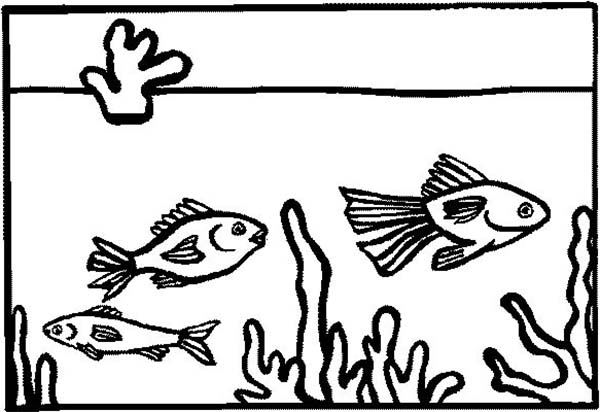 fish tank for home decoration coloring page netart
