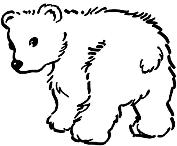 little baby bear coloring page netart
