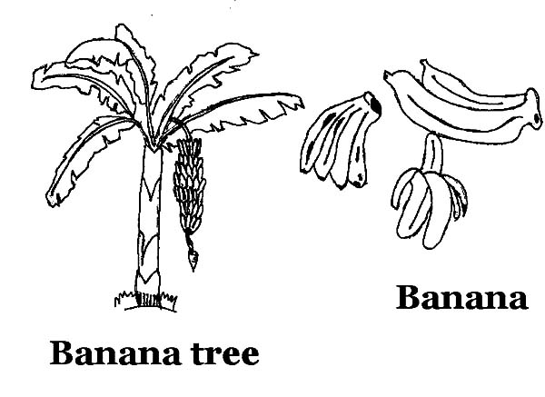 free banana tree leaf coloring pages