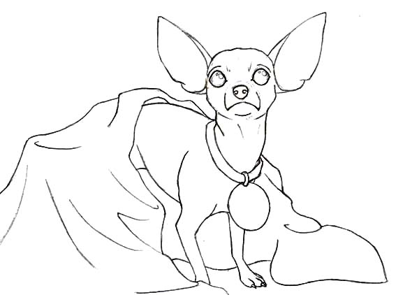coloring pages chihuahua dogs chihuahua coloring page