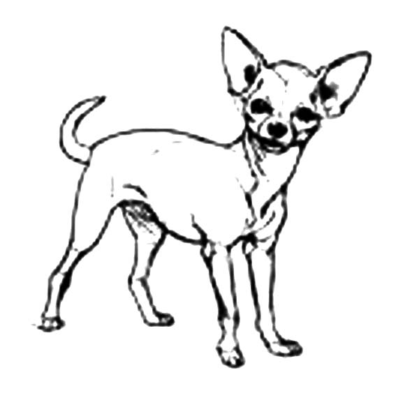 coloring pages chihuahua dogs coloring pages chihuahua dogs
