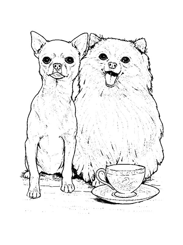 Chihuahua And Pomeranian Dog Coloring Pages